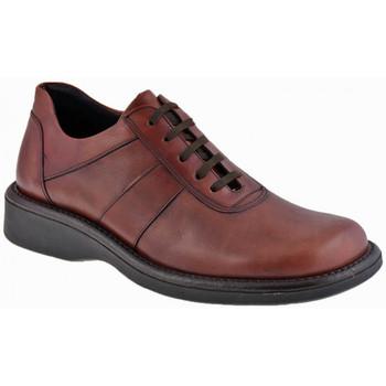 Boty Muži Kotníkové boty Nicola Barbato  Fialová