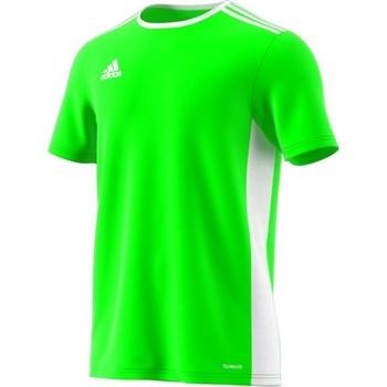 Textil Muži Trička s krátkým rukávem adidas Originals Entrada 18 Zelená